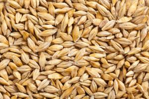 Super foods, the ultimate health foods – Barley